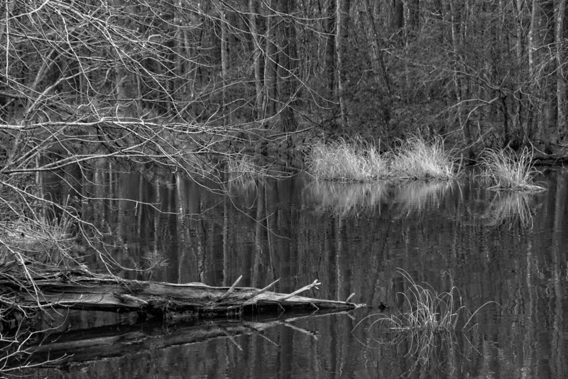 Impoundment at Lake Mattamuskeet