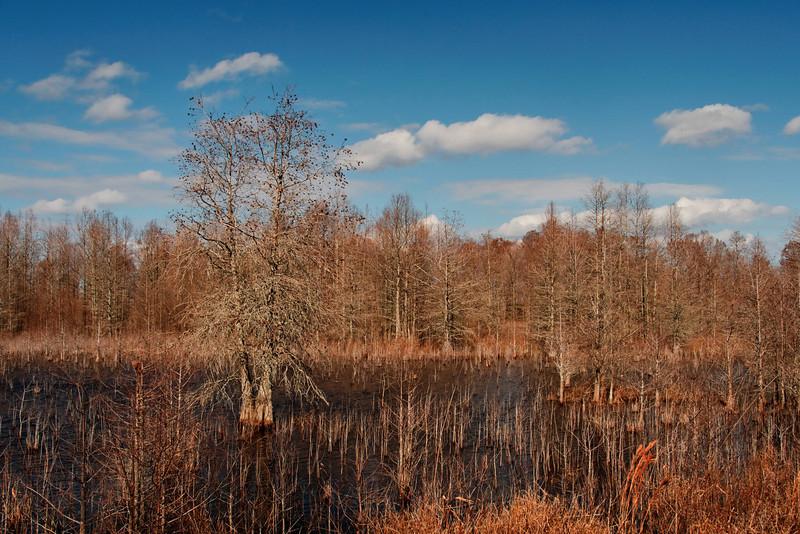 Impoundment Area, Lake Mattamuskeet II