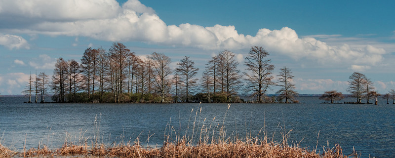 Cypress Island in Lake Mattamuskeet