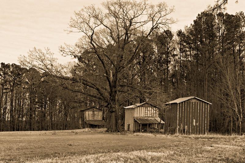 Tobacco Barns near Greenville, NC