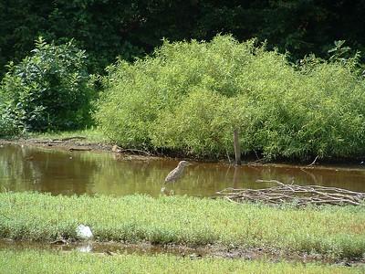 Lake Needwood Aug 3, 2004