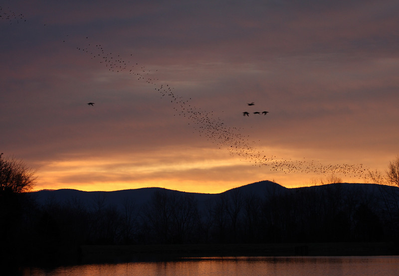 A tremendous flock of birds (blackbirds?) strung across the entire sky, taking several minutes to pass over with seemingly no end in sight.<br /> (100mm) Lake Shenandoah, 12/17/09.