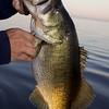Unhooking a largemouth freshwater bass.