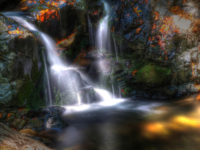 Uvas Canyon. Morgan Hill, CA.