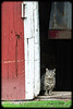 Barn cat checking out the stranger with the camera!