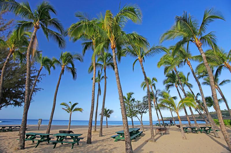 Palm Trees - Hulopo'e Beach -  Lana'i, Hawaii