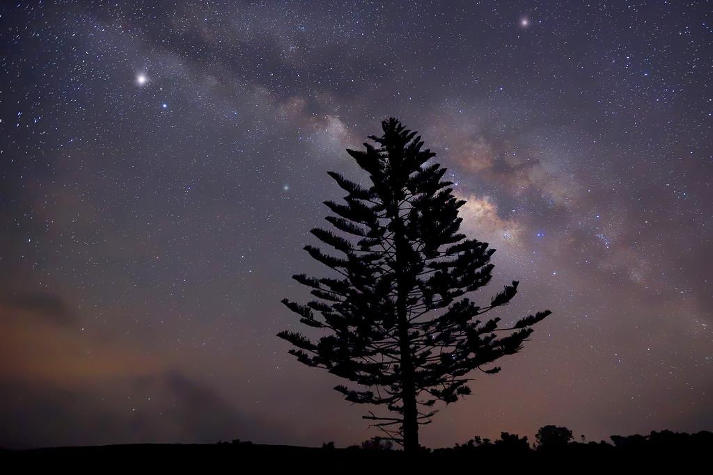 Cook Pine beneath the Milky Way.   Beautiful clear night on the island of Lana'i.