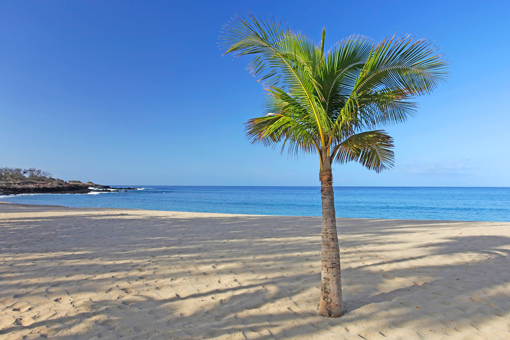 Palm Tree at Hulopo'e Beach -  Lana'i, Hawaii