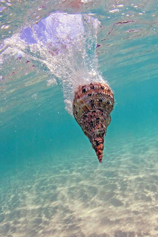 Shell Dropped into Hulopo'e Bay - Lana'i, Hawaii