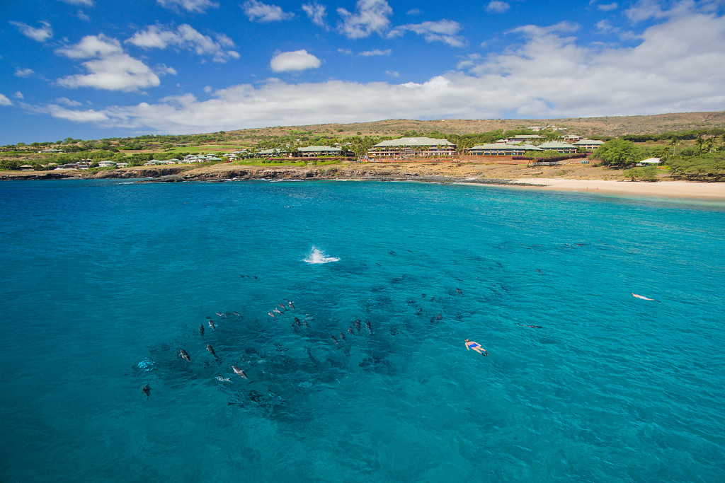 Spinner Dolphins - Hulopo'e