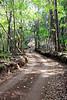 Munro Trail - Lana'i, Hawaii