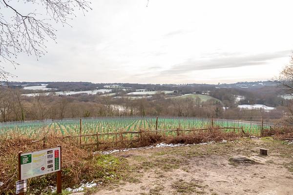 Kingscote Vineyard