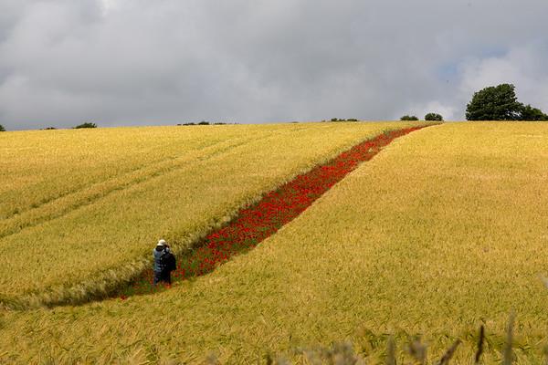 Photographic Poppies