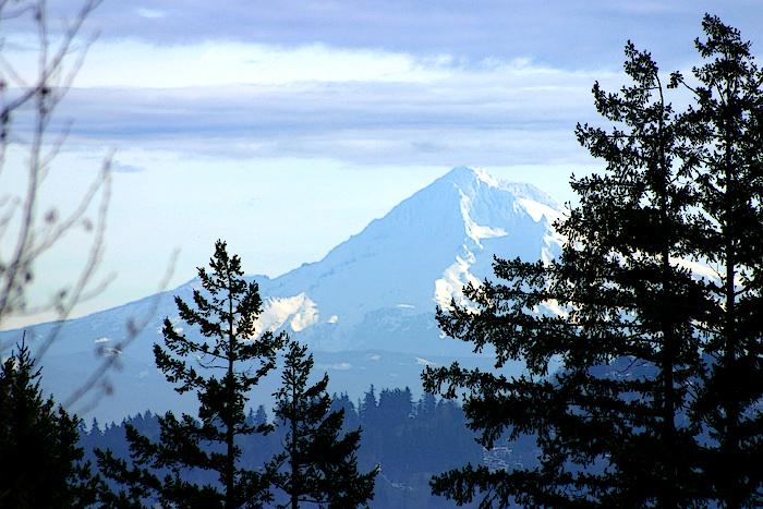 Mt. Hood, taken at the Rose Gardens in Portland, Oregon