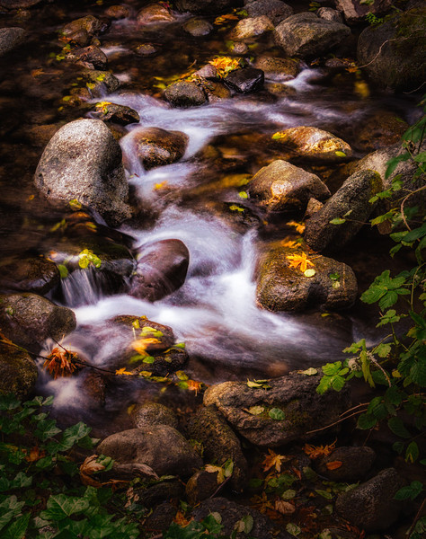 Lithia Park Creek 4