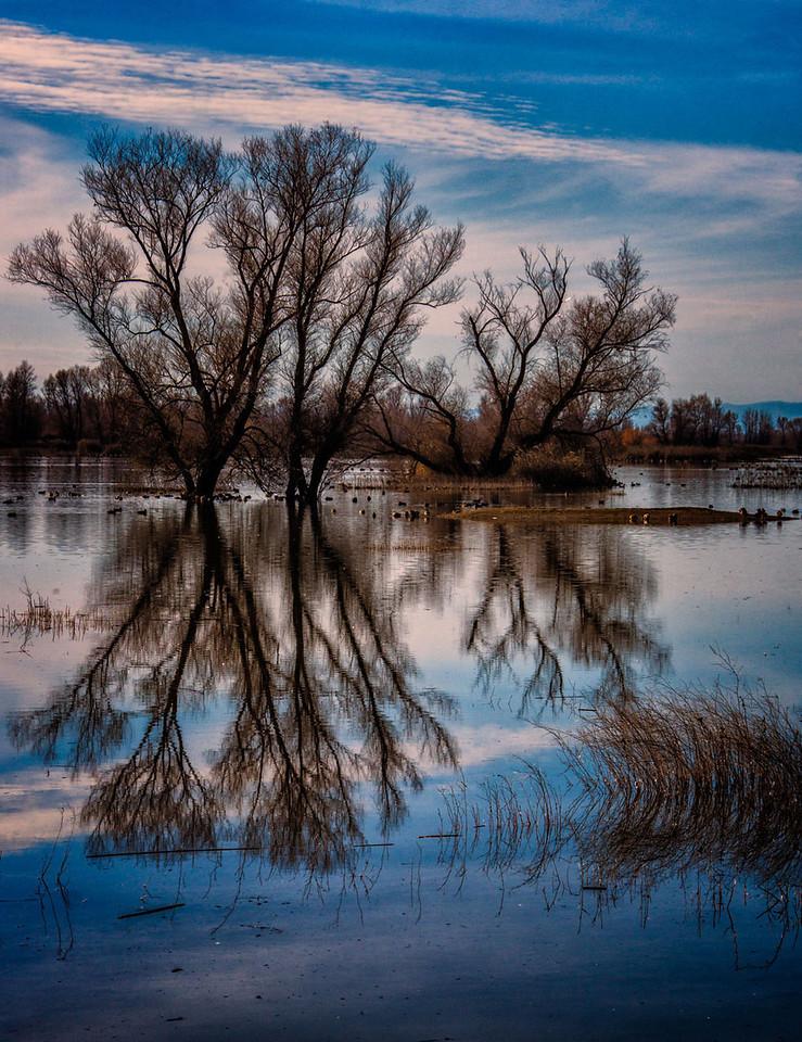 Grey Lodge reflection