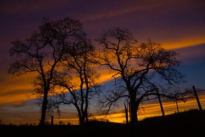 Driveway Sunrise