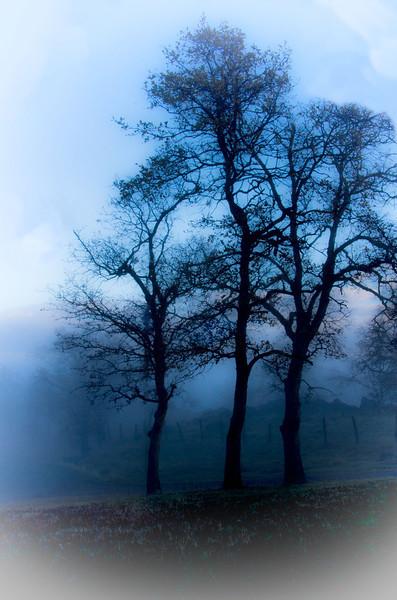 Front yard fog