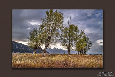 Framing the Tetons  -  Photograph by Wayne Heim ©2014