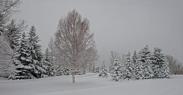 North Glenmore Park, Calgary