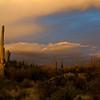 Saguaro at sunset.