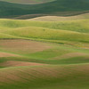 Rolling Hills of Palouse