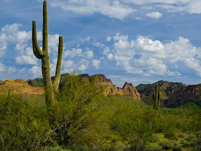 Tonto Cactus View - 19