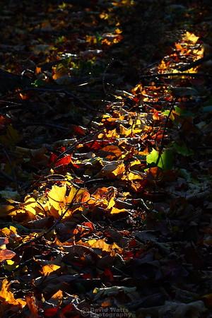 Arboretum's Last Light