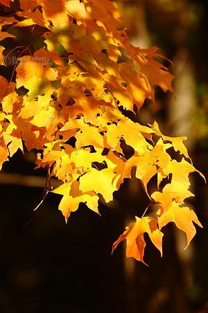 Arboretum Color