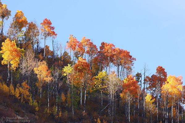 Aspen on Ridge