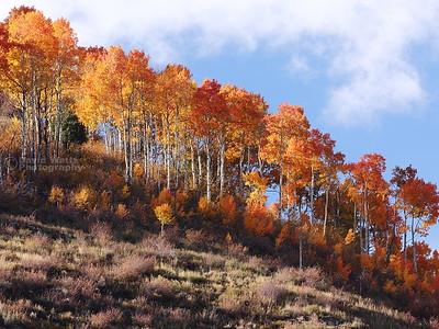 Aspen on Ridge 2