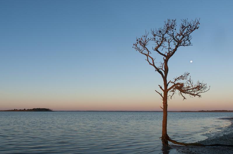 Assateague Island Tree and Moon