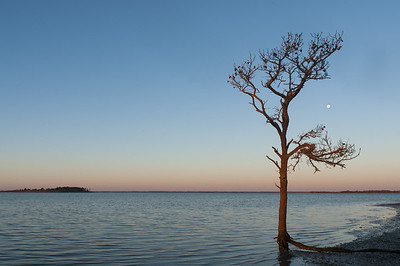 Assateague Island Tree and Moon