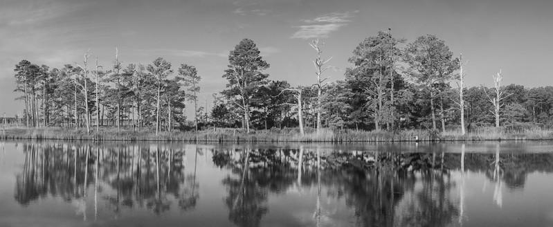 Blackwater Monochrome Landscape