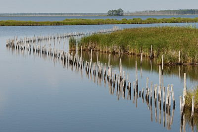 Blackwater Marsh Rehab.