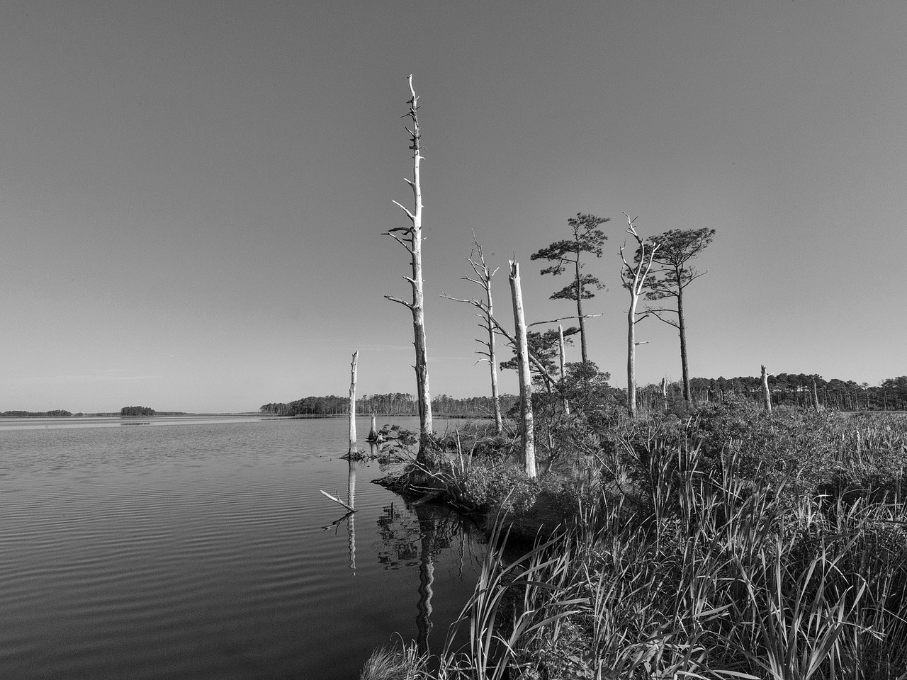 Blackwater River Landscape - Monochrome