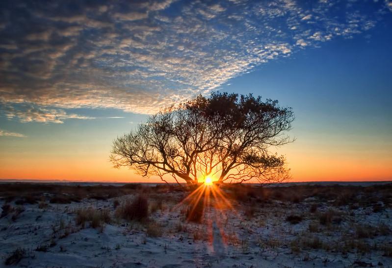 Barrier Island Tree Sunrise - Assateague Island