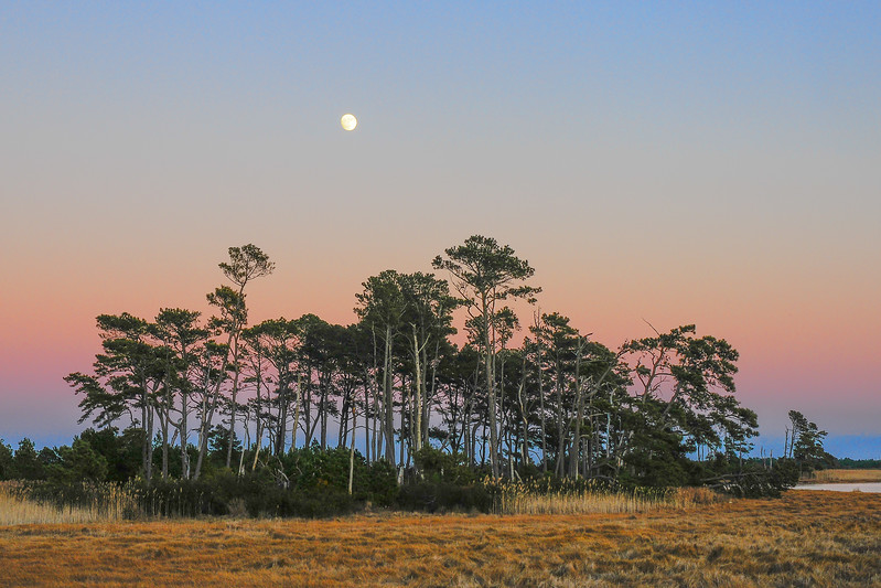 Chincoteague Moon Rise