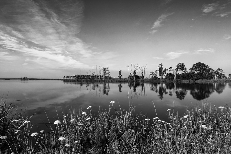 Blackwater River Monochrome Landscape