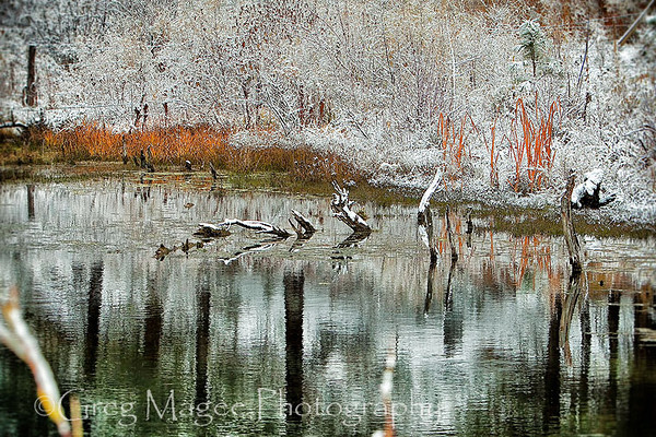 Beaver pond 2