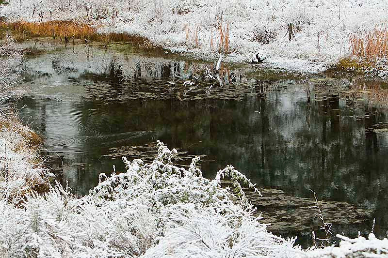 Snowy pond with beaver crossing