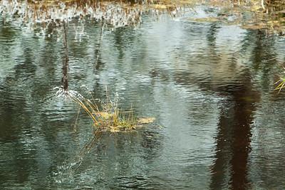 Beaver pond 3