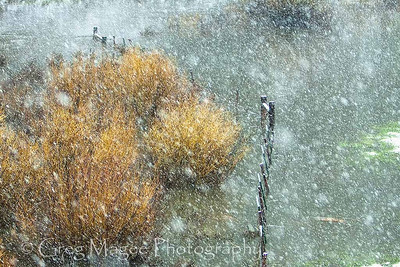 Spring snowstorm in Silvies Valley