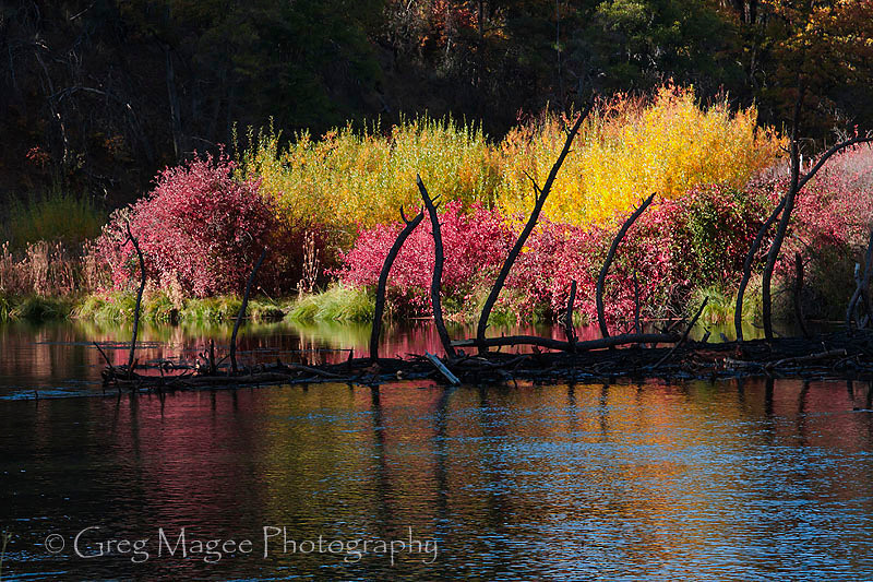 Fall colors with burnt snag
