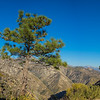 Pine Tree on Mountain Edge