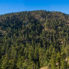 Forested Southern California Mountain