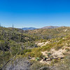 Angeles Mountain Meadows