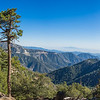 Tall Cliffside Pine Tree