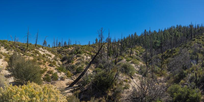 Fallen Tree in Mountain Forest