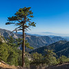 Cliffside Pine Tree